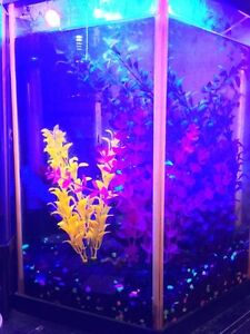 Neon LED Lit Aquarium (everything except fish included)