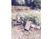 firewood/tree logs free to collector