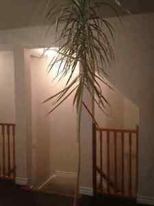 4 houseplants for sale.
