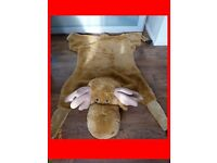 gift toy, carpet, lounging, cuddly toy reindeer
