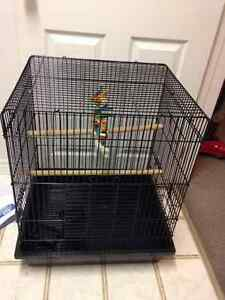 parrot and budgie cages