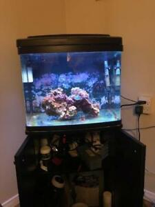 29 Gallons biocube with stand