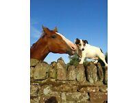 HOUSE/ANIMAL SITTING! HORSES! DOGS! LLAMAS.. ALL ANIMAL MANAGEMENT.