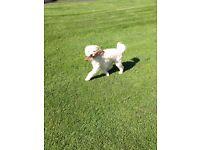 WALKIES DOG WALKING SERVICE - Town and Country Walks around Melrose & Galashiels. Dogs Love Walkies