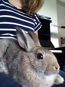 6-week-old Male Bunny