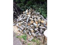 LOGS for sale - unseasoned, Lyme tree logs, £40.