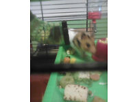 hamster,rat,mouse,gerbil cage