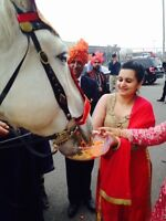 WHITE MARE, BARAAT HORSE, WEDDING HORSE, BHARAT, SOUTH ASIAN