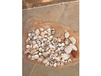 Selection of Shells and other stones. Collect from Fulham