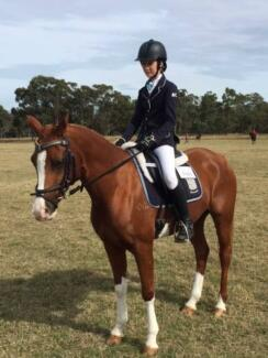 Stunning 14.1 hh, 7yo Arab x pinto Mare- with movement to die for Ipswich Ipswich City Preview