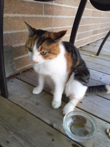 Cat Lost - Sheppard and Senlac area