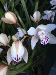 Orchids and plants cheap, Langwarrin Frankston Area Preview