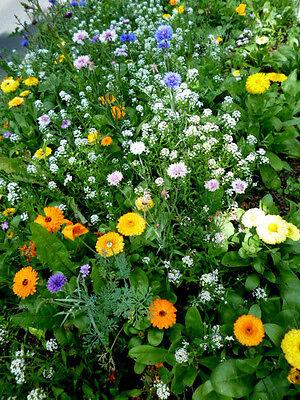 _Blühende Insekten Bienen  Wiese  >>Wildblumen<<  bunte Mischung -- Portion--