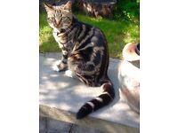 MISSING CAT BURNSIDE AREA £100 REWARD FOR SAFE RETURN