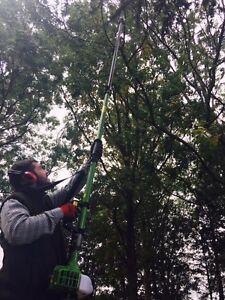 Professional Petrol 4.2M Long Reach Telescopic Pole Saw Polesaw Branch Cutter