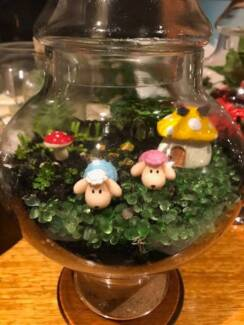 terrariums- open and closed.