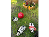 baby rabbits 2 for 70GBP