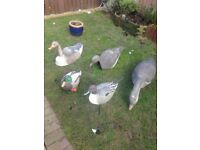 I have different decoys for sale all in good condition text or email for price