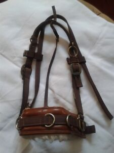 Full- Training Halter - Leather & Nylon