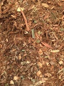 Premium Garden Mulch - FREE DELIVERY Park Ridge Logan Area Preview