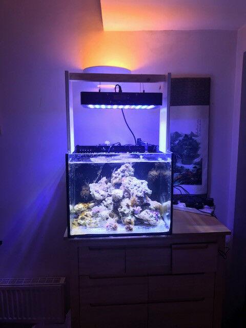 Stunning 100l complete nano marine reef aquarium fish tank for Aquarium marin complet