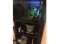 Askoll 70 Litre Aquarium with 4 Stage Filtration System & Extras