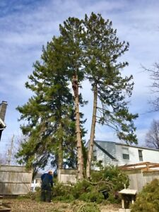 Tree trimming and removal services