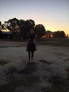 Welsh Pony for Lease Busselton Area Preview