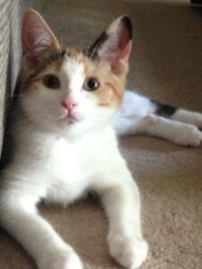 Adopt Local Cats Amp Kittens In Ontario Pets Kijiji Classifieds