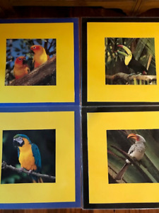 TROPICAL BIRD POSTERS