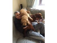 HAPPY HOUNDS. Friendly dog walking / Sitting in the Bournemouth / Christchurch area.