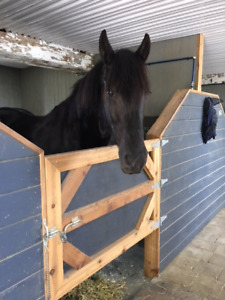 Flashy Friesian Horse for Part-board