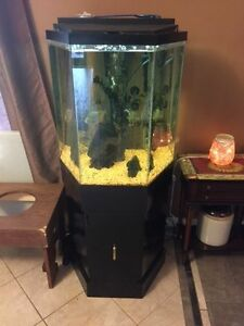 Matching 35 gallon fish tanks and stands