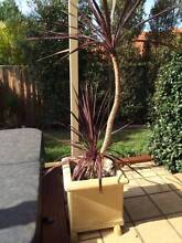 Pot with plants Glenmore Park Penrith Area Preview