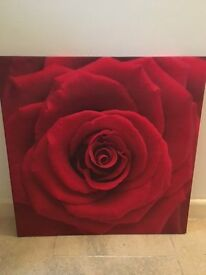 red rose picture - for a valentine?