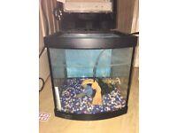 Great starter fish tank!