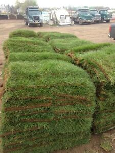 Fresh nursery sod available now! - Elmsdale Landscaping
