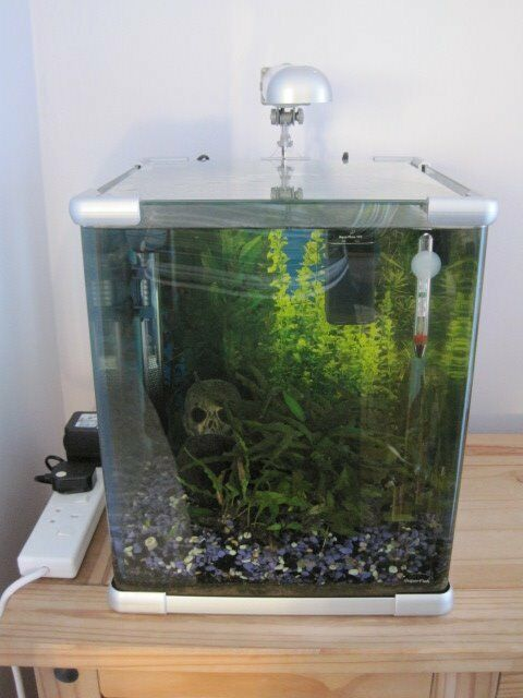 superfish aqua qube 40 aquarium size 33cm x 33cm wide x 40cm high 40l in kingswood