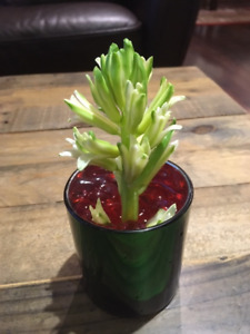 72 Green/Mercury-3 inch Mini Vases or Votives $50