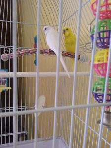 Budgies with cage and stand