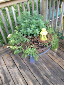 Fire Pit used as Planter