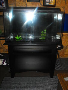 40 Gallon Tank Setup