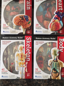 Human Anatomy Model Sets by Learning Resources (BRAND NEW!)