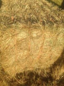Hay for sale (organic). Large Square