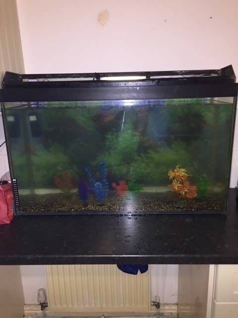 3FT Fish Tank with Small Filterin Stanley, County DurhamGumtree - 3ftx2ftx1.5ft Fish Tank, Excellent Condition Selling as have a new one and was too big for me to manage, Collection From Stanley Or Can Deliver for Fuel Costs. £50 Or Nearest Offer