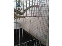 Parrot cage QUICK SALE.
