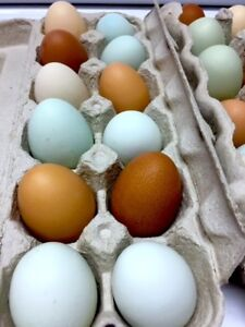 FREE RANGE ORGANIC RAINBOW COLOURED EGGS