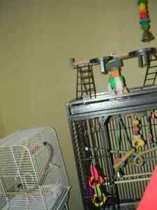 Great Cage: Includes lrg perch and play stand