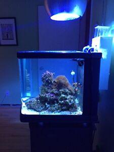 Aquarium eau salée 28 gallons TOUTE ÉQUIPÉE