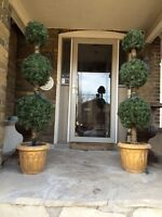 Outdoor Topiary trees with lights
